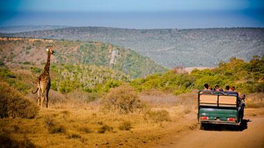 Giraffe und Jeep, Giraffe im Krüger Nationalpark