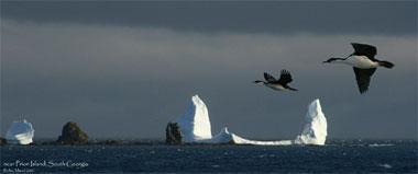 Eisberge und Vögel, Eisberg in der Antarktis